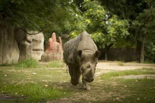 Rhino-2517143_1920