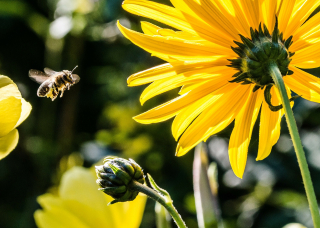Bee-in-the-approach-209145_1920