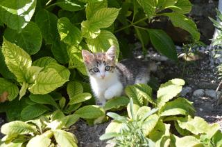 Cat-2464452_1920